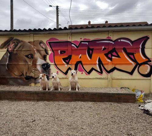 Graffiti de chien dans un jardin garage à domicile.
