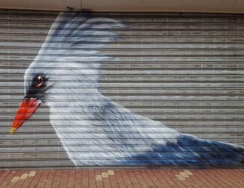 Portrait d'oiseau rue Maes à Lens