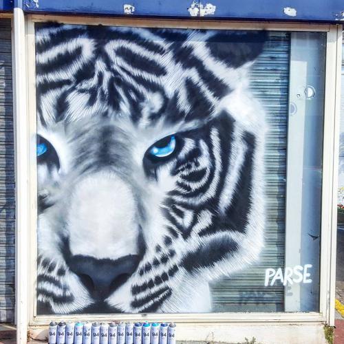 Graffiti tigre blanc à Maubeuge