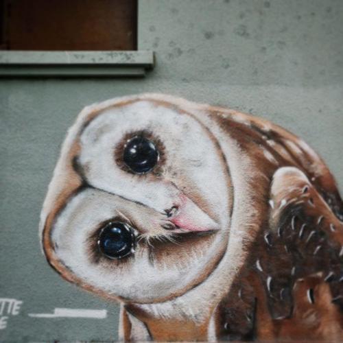 20200615-024 - Graffiti chouette hibou
